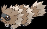 Pokemon Xy Zigzagoon 5 High Resolution Wallpaper