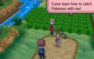 Pokemon Xy Zigzagoon 7 Free Hd Wallpaper